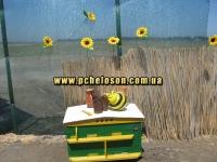 Пчелиный колорит
