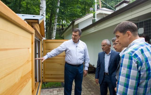 Янукович о сне на ульях